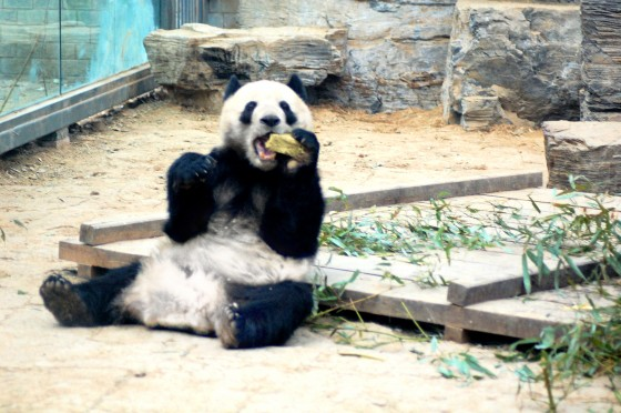 seeing-pandas-china
