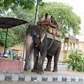 elefante_india