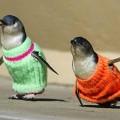 Pingüinos muy abrigados