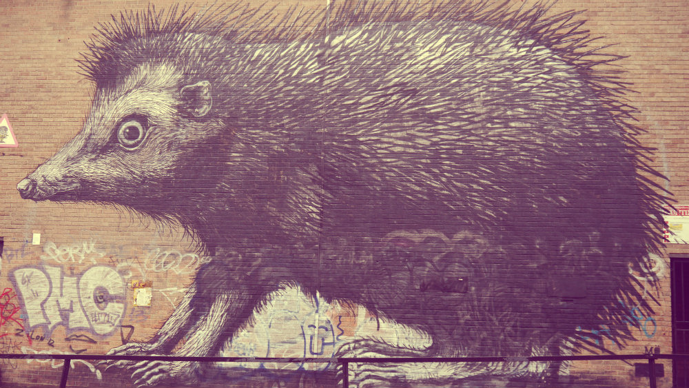 Graffiti puercoespín