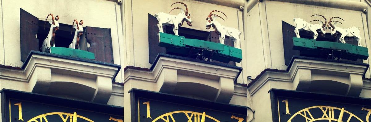 Cabras peleándose en el edificio del ayuntamiento