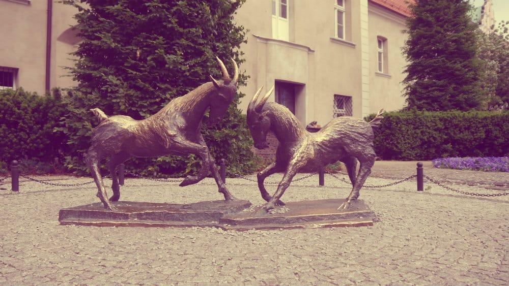 Cabras peleando