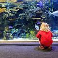 Aquarium del Dubai Mall