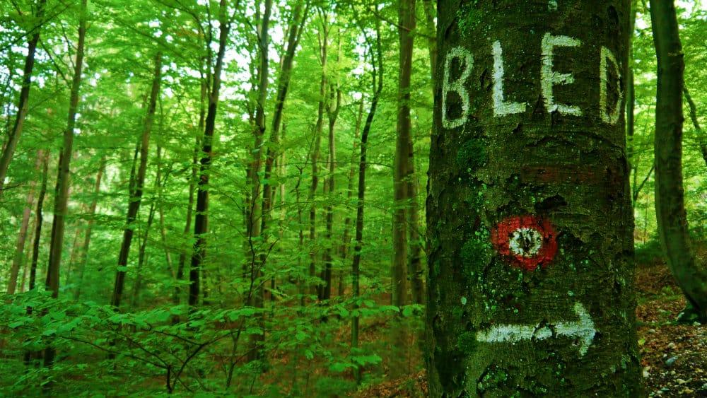 Bosque y letrero de vuelta a Bled
