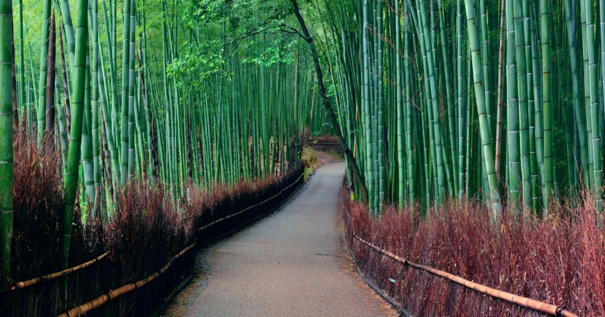 Bosque de bambú de Arashiyama - Kyoto