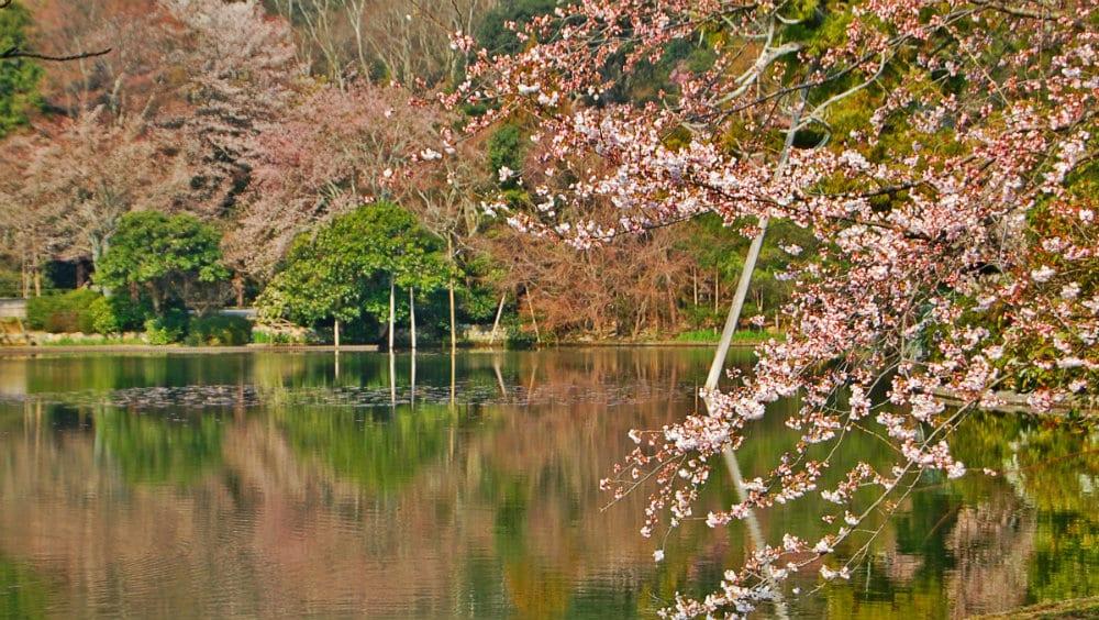 Jardines de Jisho Ji - Qué ver en Kioto