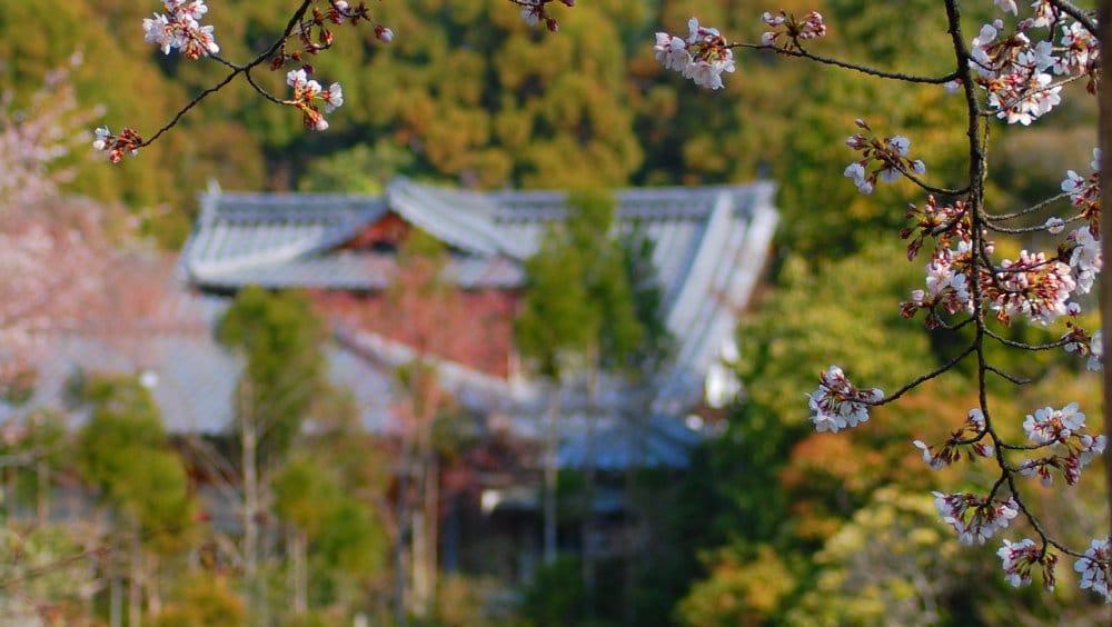 Qué ver en Kioto, Japón
