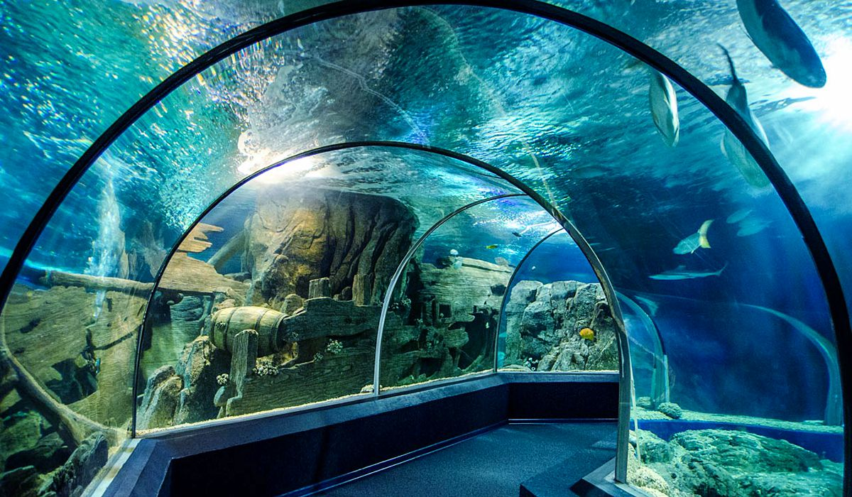 Best areas to stay in Sochi - Near Discovery World Aquarium