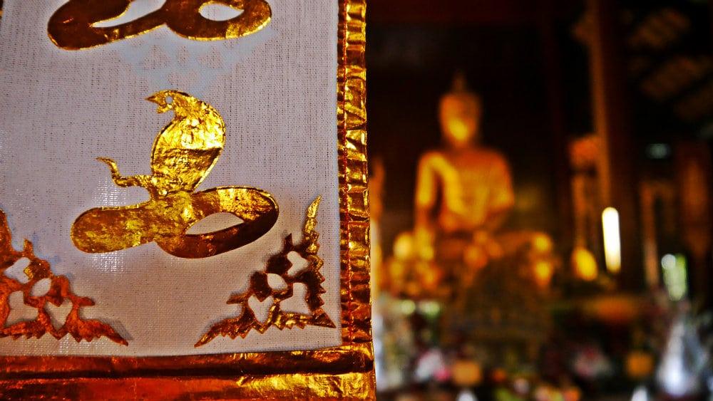 Qu ver en chiang mai la rosa del norte de tailandia - Vivero la rosa del norte ...