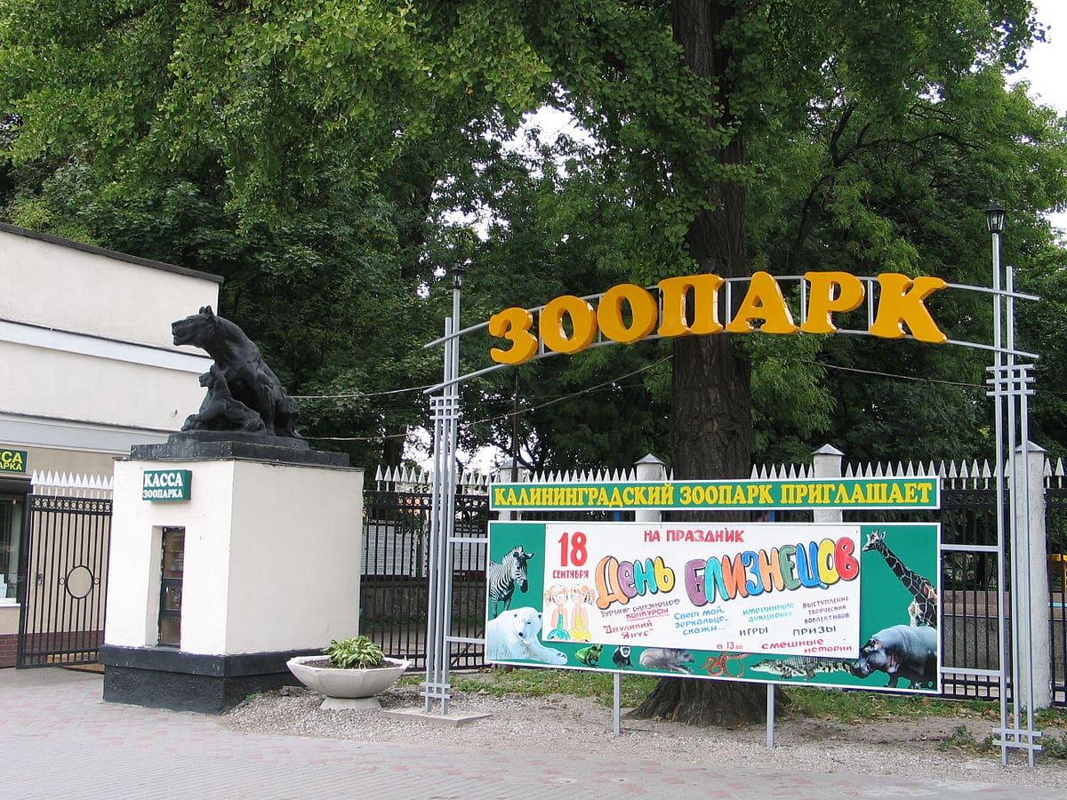 Dónde dormir en Kaliningrado - Zoo
