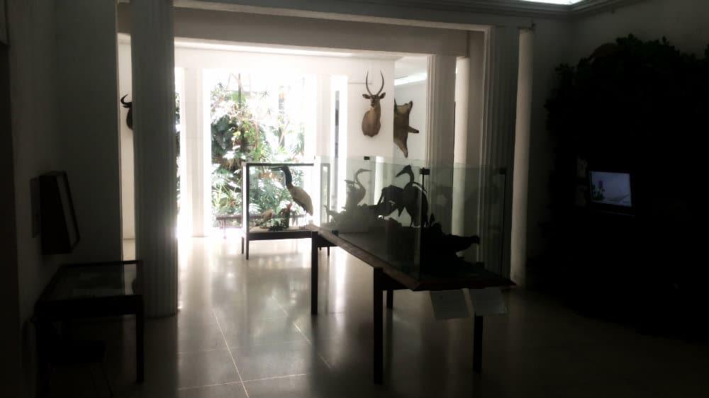 Interior del Museo de las Ciencias de Caracas