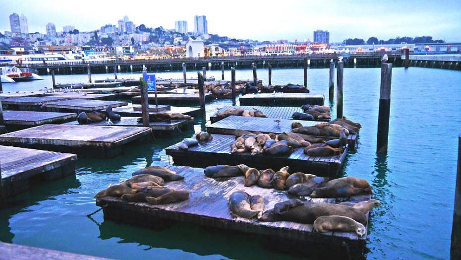 Leones marinos en el Pier 39 de San Francisco