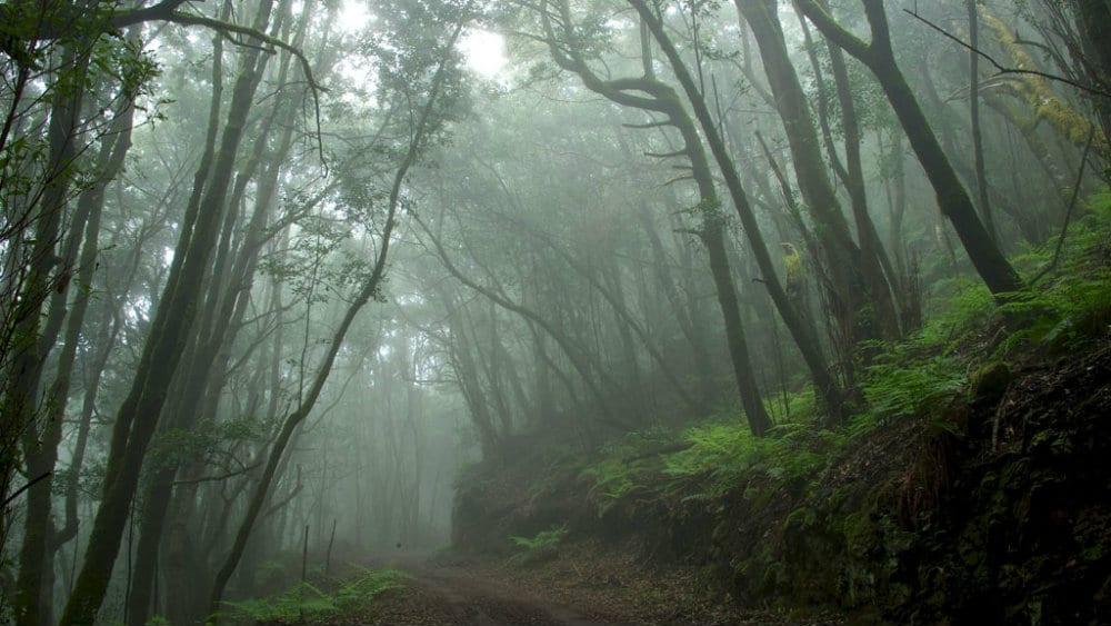 Garajonay - Parques naturales de España