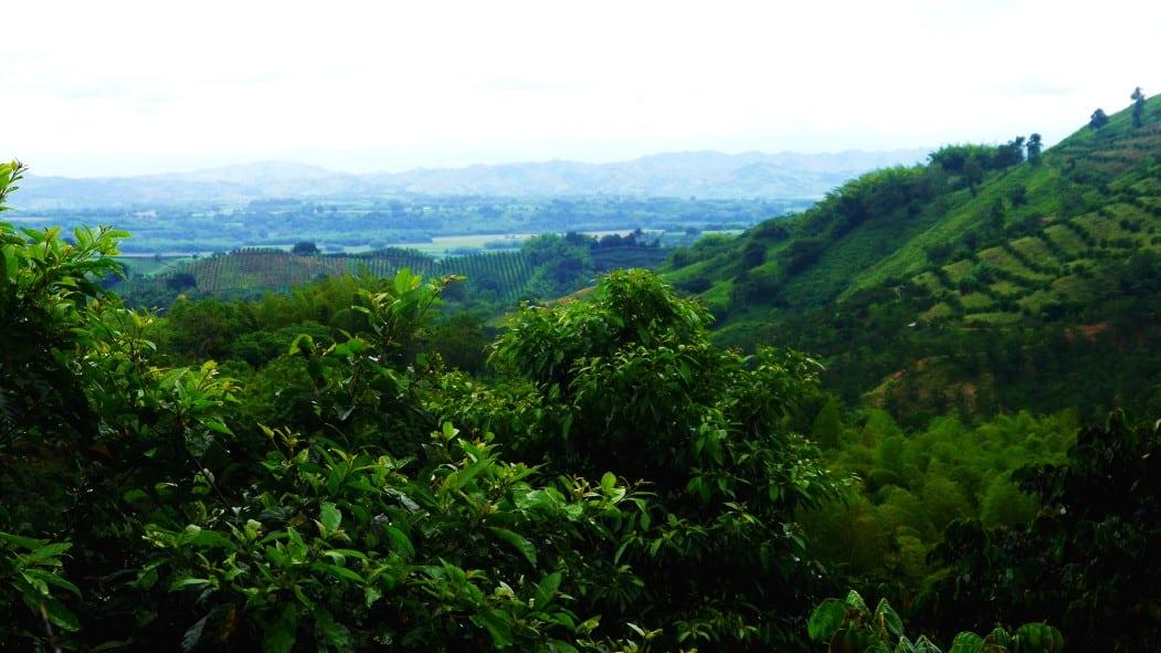 Típico paisaje del Eje Cafetero colombiano