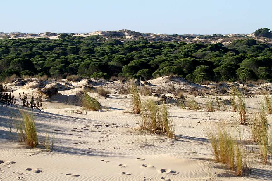 Parque Nacional Doñana - Parques naturales en España